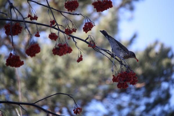 На середину сентября приходится пик отлёта птиц