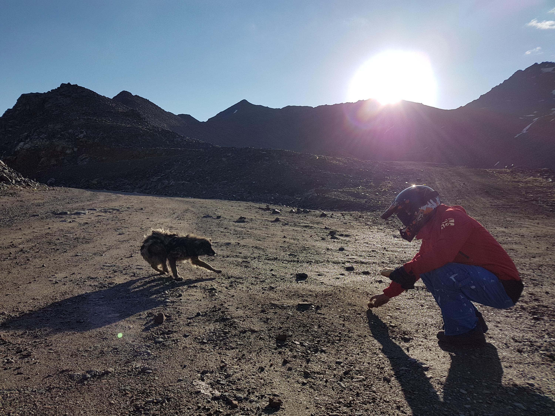 В горах Роман и Максим встретили собаку, не известно как оказавшуюся там. Путешественники угостили её хлебом, от которого она не отказалась