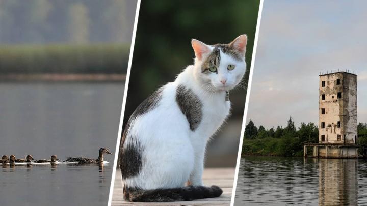 Безмятежность родной природы: смотрим на нестандартную Башкирию глазами нестандартных фотографов