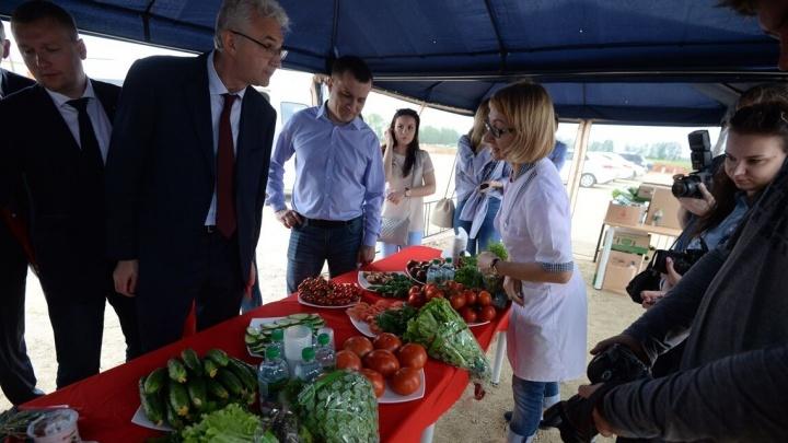 УГМК построит на проспекте Космонавтов рынок, чтобы продавать сыр и помидоры из новых гигантских теплиц