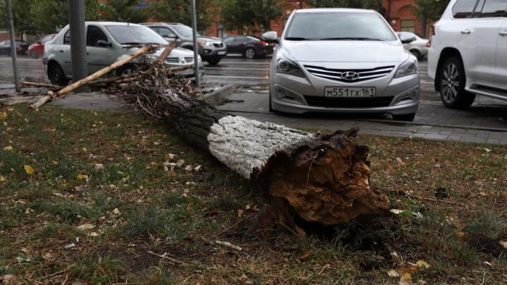 Упавшие деревья в Ростове: ищем свои машины в онлайн-трансляции 161.RU