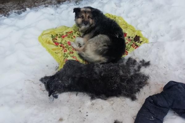 От чего скончалась собака, неизвестно