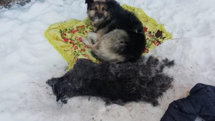 В Екатеринбурге волонтеры нашли пса, который сутки пытался отогреть свою умершую подругу