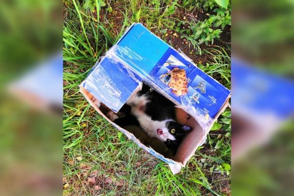 Кто-то оторвал одну из створок коробки и оставил коту кусок пиццы