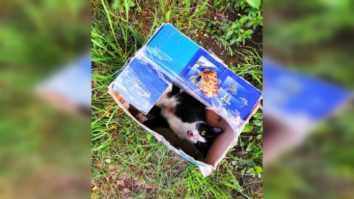 Новосибирские волонтёры спасают кота, которого неизвестные заживо похоронили в коробке