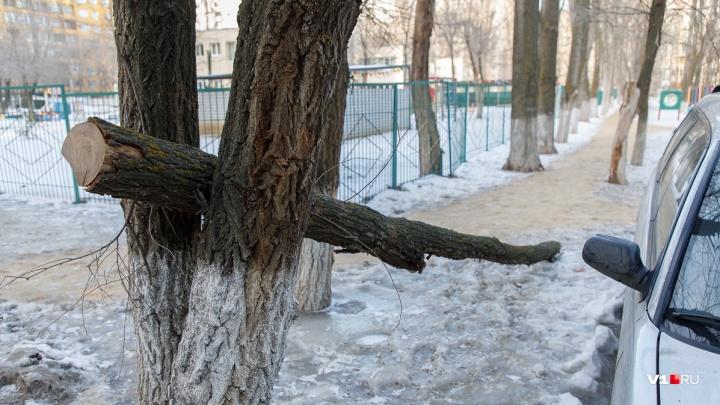 По факту падения дерева на голову студентки ВолгГМУ в Волгограде расследуют уголовное дело