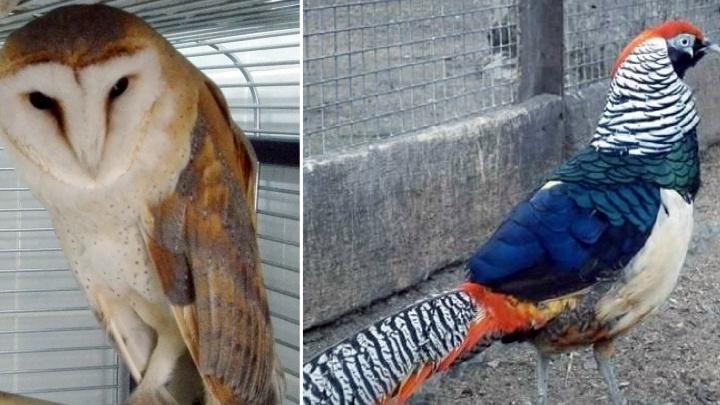 В омский зоопарк привезли «сову с лицом обезьяны»