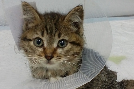 Он жалобно мяукал: в центре Екатеринбурга из столба достали крохотного котёнка с оторванным хвостом