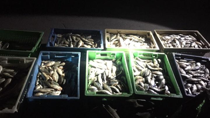 За полтонны рыбы трем донским браконьерам грозит два года тюрьмы