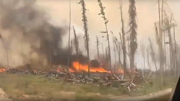 «Бессмысленно и вредно»: губернатор высказался о тушении пожаров «в зоне контроля» по краю