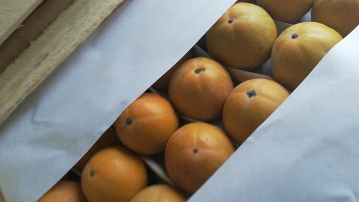 Под Самарой задержали фуру с 19 тоннами фруктов с поддельными документами