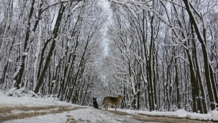 Мэрия Самары пригрозила уголовными делами за застройку парка 60-летия Советской власти