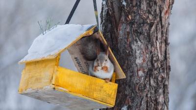 И снег, и дождь. Синоптики рассказали о погоде в Тюмени с 4 по 8 ноября