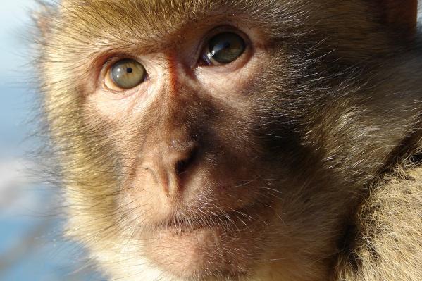 В ветеринарную клинику обезьяну привезли, чтобы сделать ей полное обследование