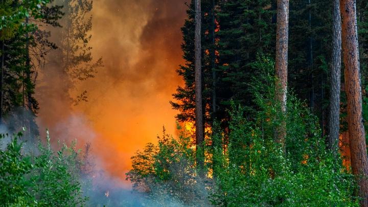 Сократилась площадь пожаров в красноярских лесах: новые кадры тушения на земле и с воздуха