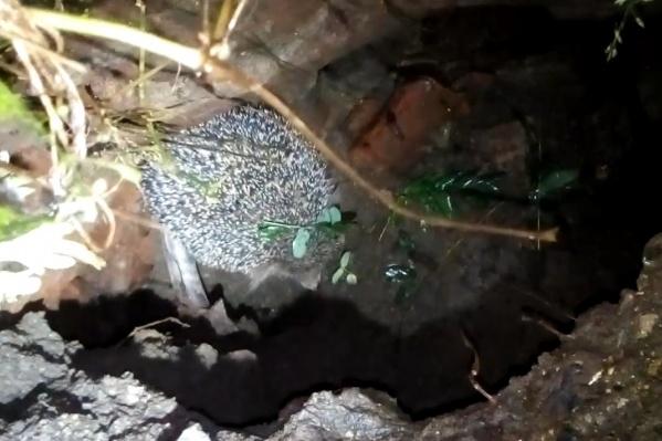 Ежик провалился в яму, а выбраться не смог