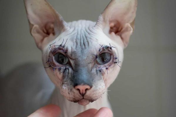 Кота прооперировали и уже идет на поправку