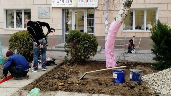 «Хотел добавить городу яркости»: волгоградец покрасил березы краской с пищевым красителем