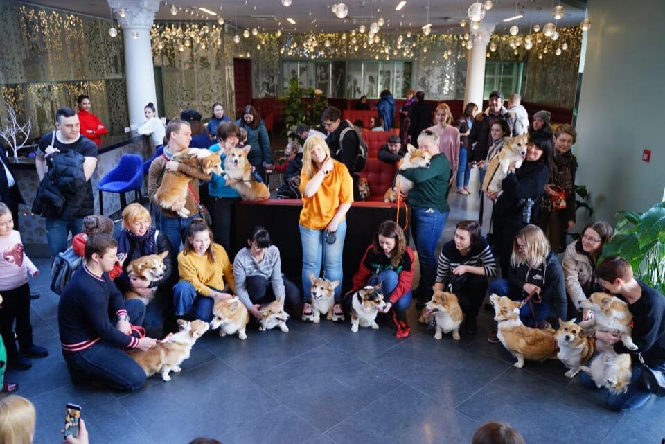 На фотосессии было около двадцати собак