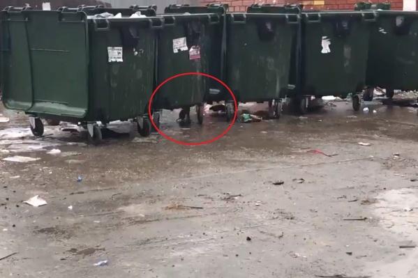 Жители боятся близко подходить к мусорке