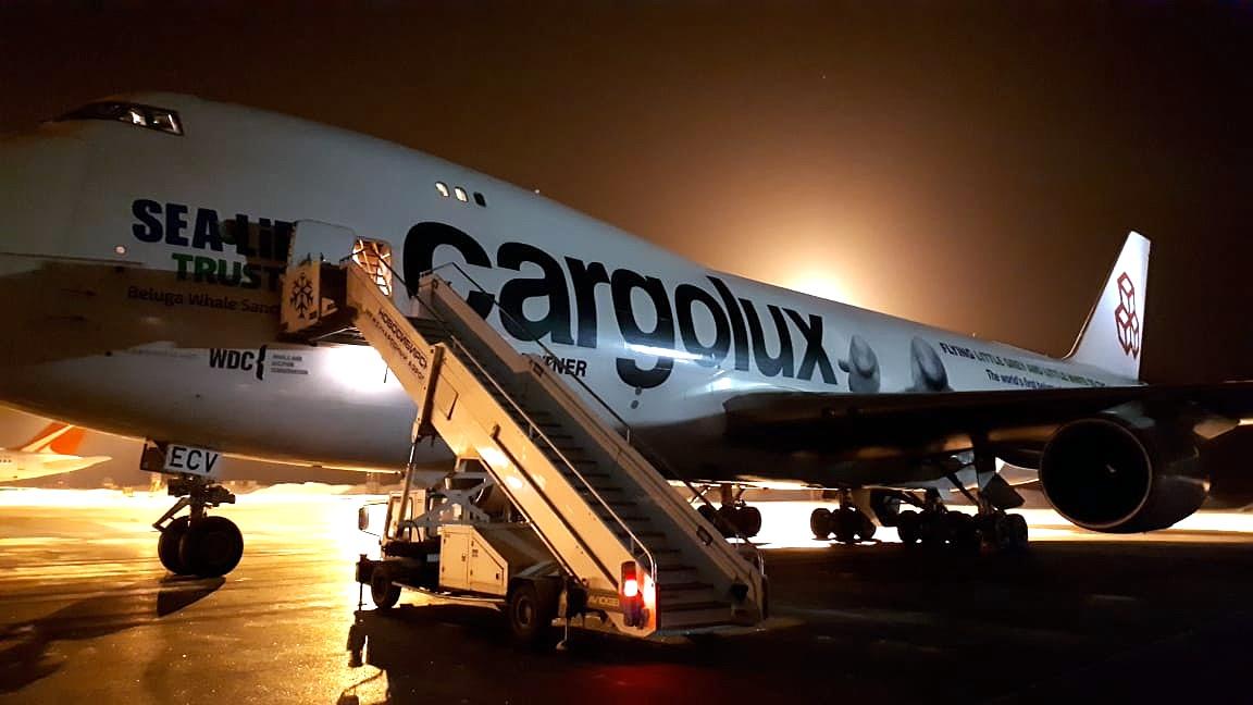 На этом самолёте авиакомпанияCargolux планирует перевезти двух белух из Китая в Исландию