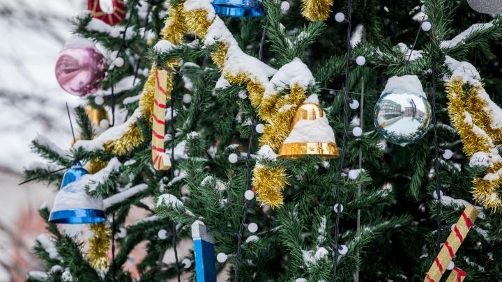 «Надежда на маленькое чудо»: что загадали на Новый год известные ярославцы