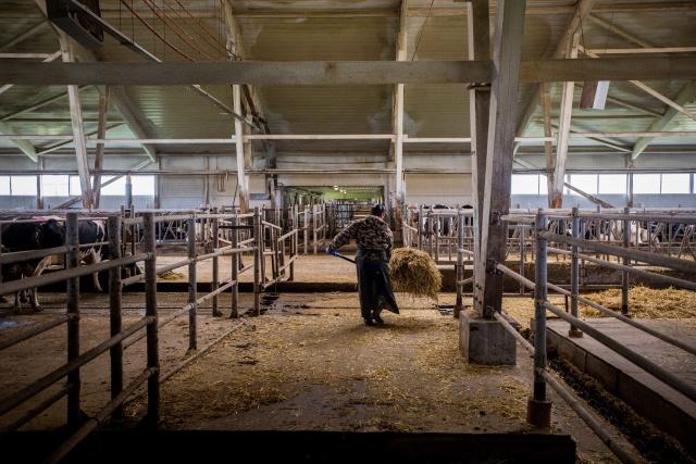 В хозяйстве работают и жители окрёстных сёл и деревень, и приезжающие из других регионов