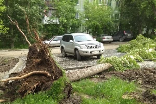 Вырванное с корнем дерево упало в паре метров от припаркованной машины