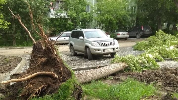 Разбушевавшийся ветер вырвал с корнем дерево на Есенина
