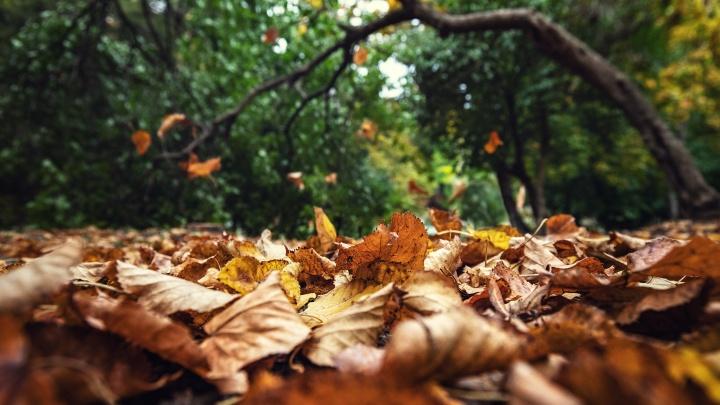 Бабье лето и туманы: рассказываем, какой будет погода в октябре