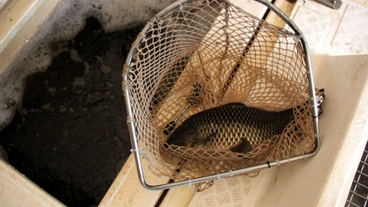 300 тысяч рублей за пять рыбок: в национальном парке поймали браконьера с сетями