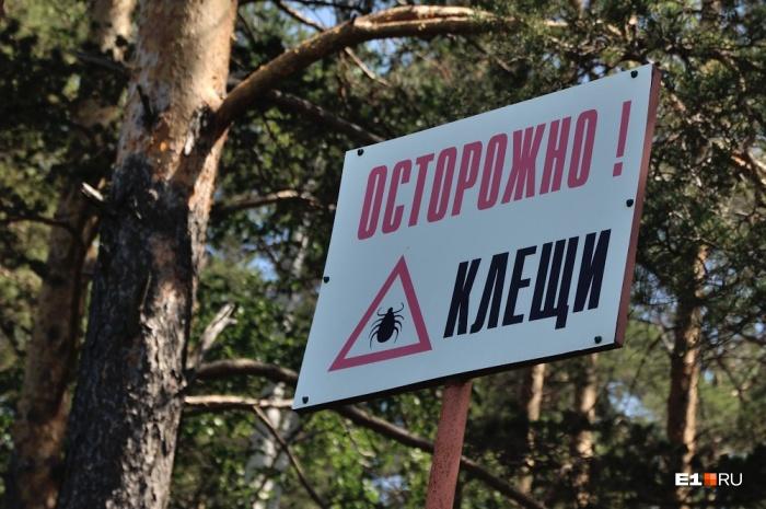В Свердловской области уже 194 человека пострадали от клещей