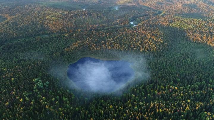 Всемирный фонд дикой природы требует расследовать незаконные рубки в Двинско-Пинежском заказнике