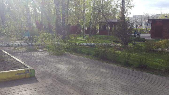 На Богдашке и в Берёзовой роще сломались деревья: по городу прошёл сильный ветер