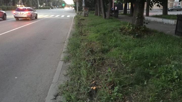 На Ленина возле «Коляда-театра» вырубили старые кусты, чтобы сделать газон как в Европе