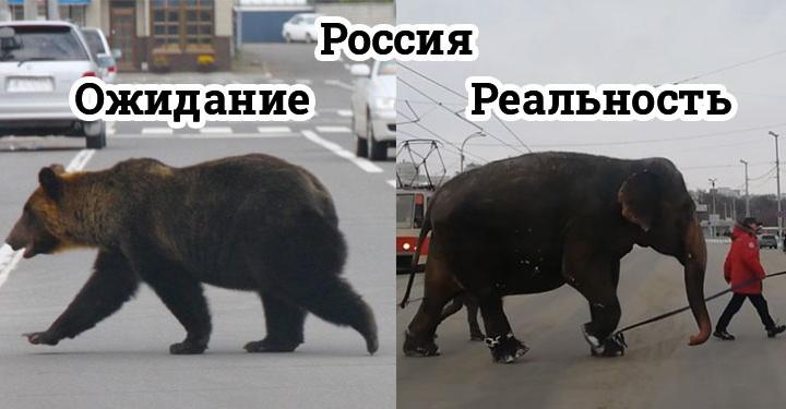 «Ожидание vs реальность»: побег слонов из Екатеринбургского цирка в мемах