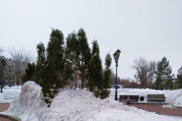 Жители Самары вступились за экзотические деревья