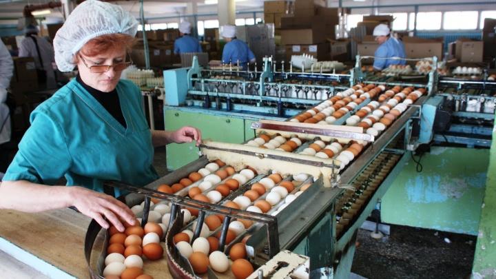 «Стараемся сбагрить побольше»:на птицефабрике раскрыли тайну появления яиц к Пасхе
