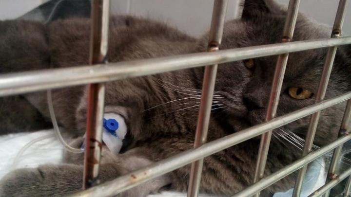 «Кота во время семейной ссоры выкинули с пятого этажа»: уральский зооспасатель — о жестокости людей