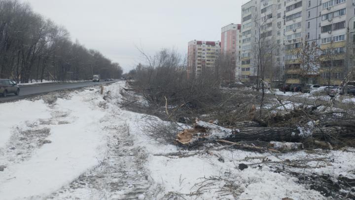 «Это варварство!»: самарцы пожаловались на массовую вырубку деревьев ради Фрунзенского моста — 2
