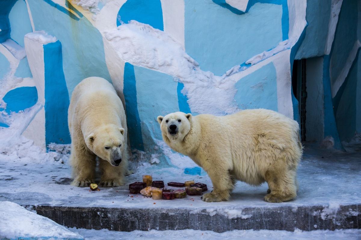 Кай и Герда отмечаютМеждународный день белого медведя