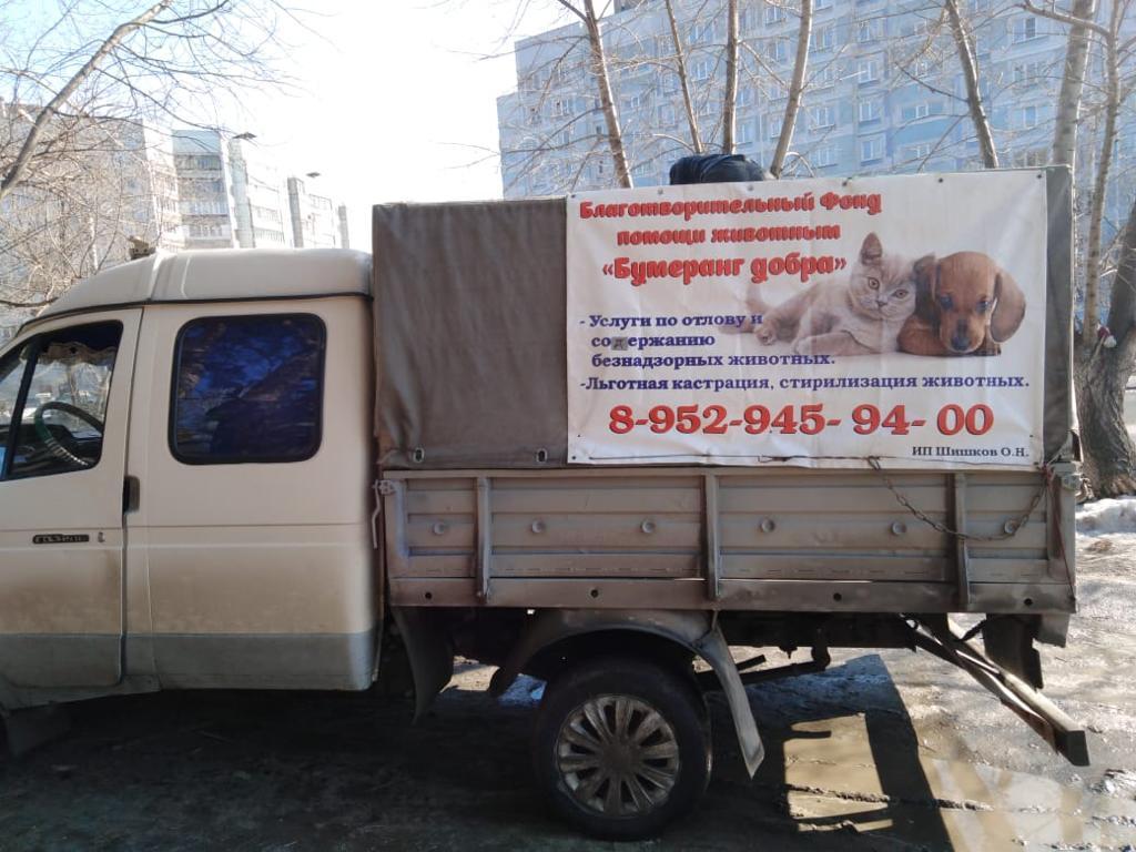 «Бумеранг добра» занимается отловом, стерилизацией и вакцинацией животных