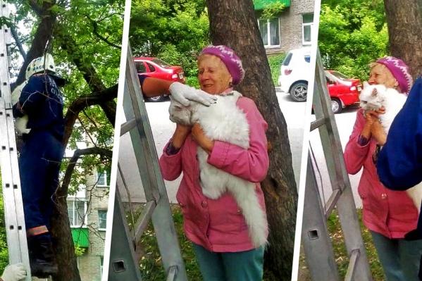 Кота Беляшика снимали с дерева около пяти минут