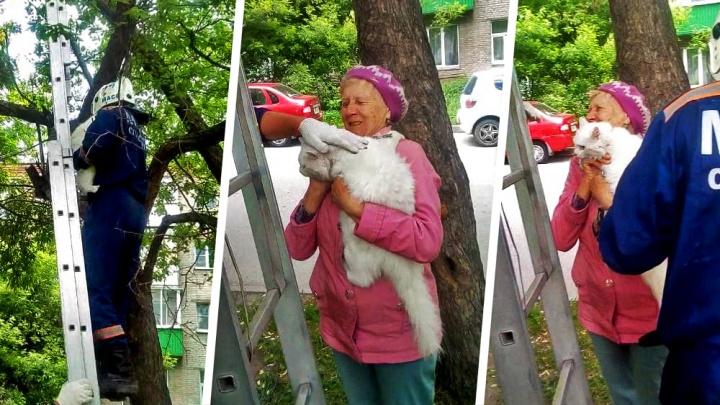 Видео: спасатели сняли с дерева напуганного кота Беляшика