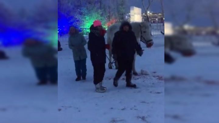 Депутат Госдумы попросила Генпрокуратуру проверить издевательства над лошадью на острове Татышев