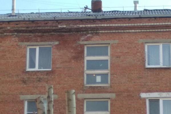 Неубранный снег стал причиной потопа в квартире Елены Силич. Чтобы решить проблему, пришлось стучать во все инстанции вплоть до губернатора и президента