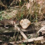 Свалку на Широтной, где завелось крысиное царство, решили убрать