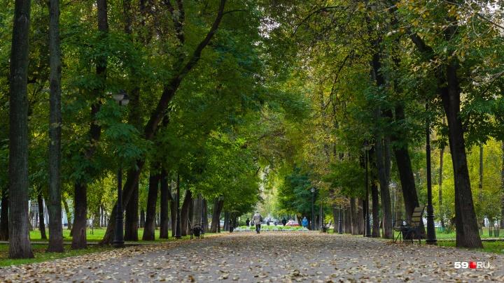 В Прикамье вернётся тёплая погода и прекратятся дожди