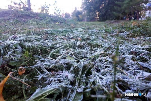 Соскучились по снимкам замёрзшей травы?