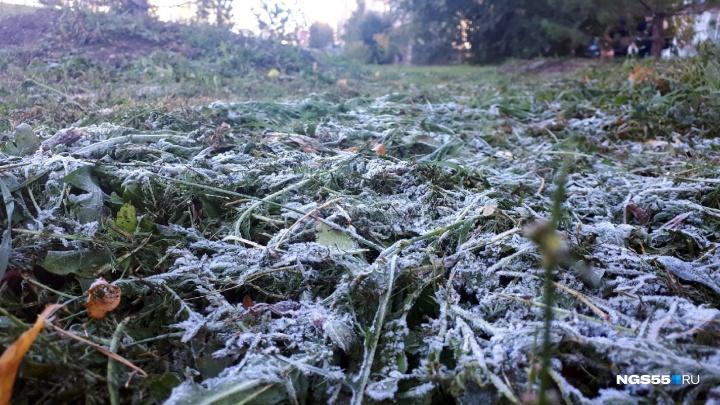 Трава в инее: в конце недели омичей ждёт холодная погода
